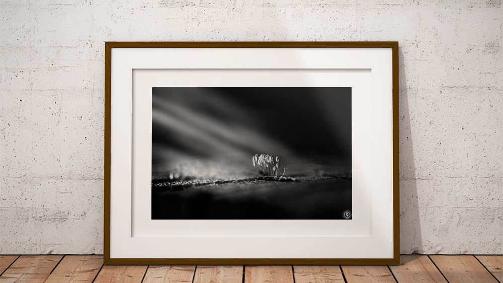 Get photography prints by Vincent